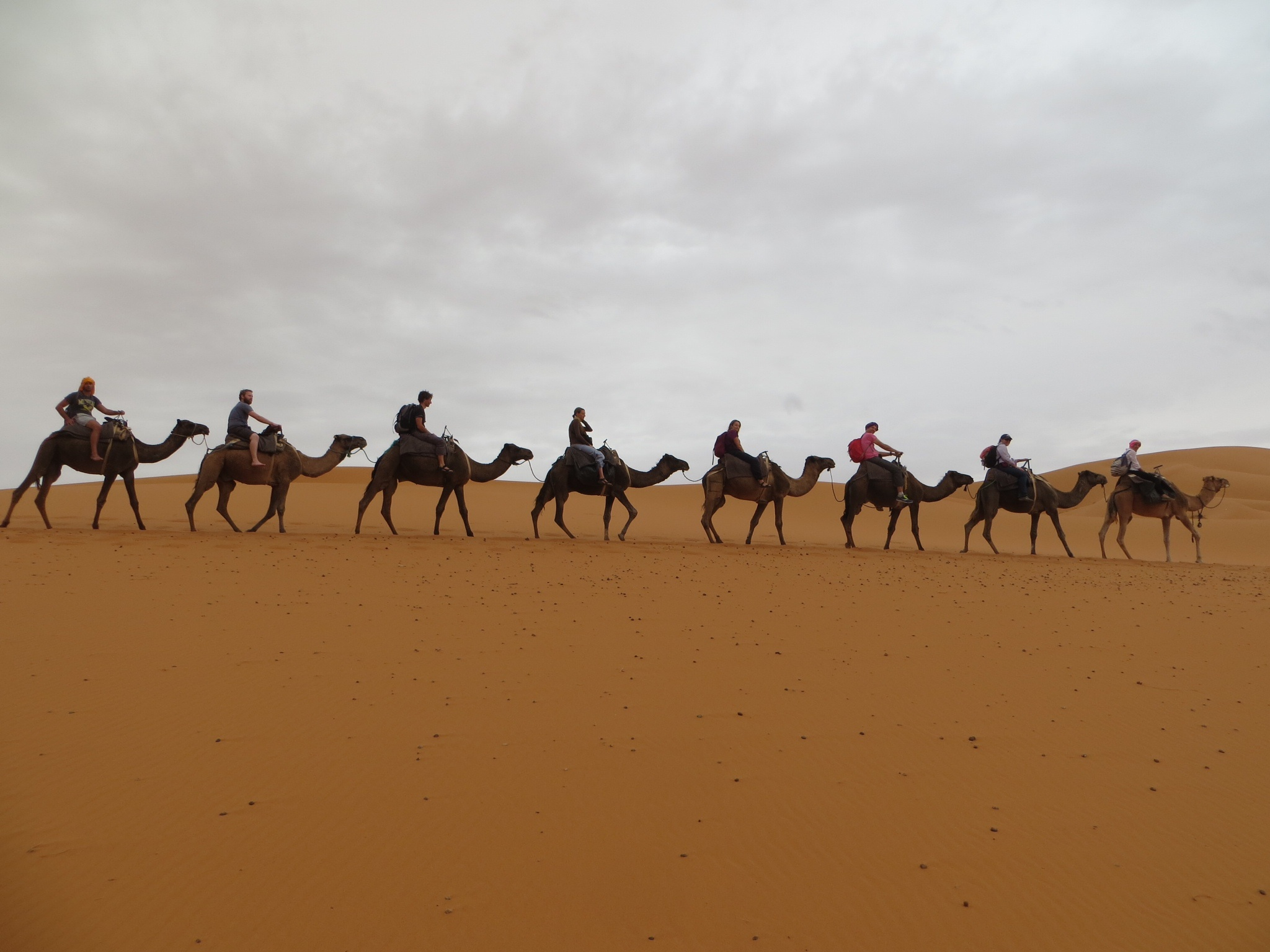 Awesome Camels Caravan Stock Photos Amp Camels Caravan Stock Images  Alamy